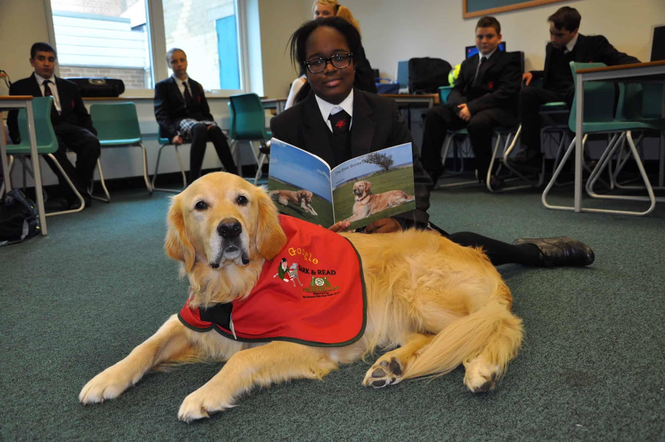 Quando i bambini leggono ai cani la loro capacità di lettura e la loro fiducia in se stessi aumentano. Il Kennel Club spiega perché è utile addestrare i cani perché ascoltino i bambini leggere nelle scuole.